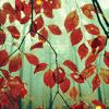 leaves, mist