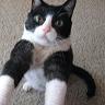 twaddleandcat userpic
