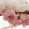 Frozen Spring