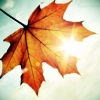 harpiegirl4: autumn leaf