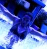 sherataylor83 userpic