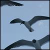 animals (seagulls)