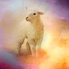 Frust-sheep: sheep: in colours