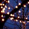 Frust-sheep: misc: tree stars