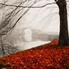 Danielle: Misc: Tree/Mist/Red