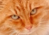 red_wild_kitty userpic