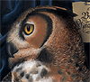 owl_clan userpic