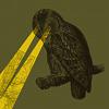 pic owl_eyes