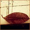ainariel_ userpic