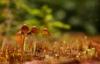 Autumn pic#93859662