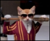 кот с битой