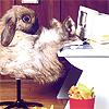 chasing bunnies*, *bunny