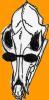 Coyoty Skull