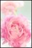princessping userpic