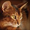 tihaya_psih userpic