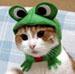 cat'n'frog