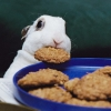 i has a cookie