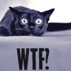 Athena's Attic: WTF cat