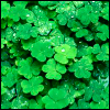 Hello, my name is Fabulous: [holidays - st. patrick's day] clovers