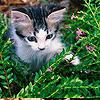 emmyemmygogogo userpic
