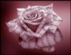 essence_de_rose userpic