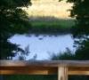 Geese on creek