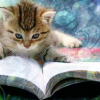 Kitten Reading by sallymn