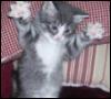 Kitten Hands