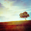 eillinora: lonely tree
