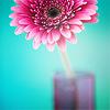 Misc: Pink Flower