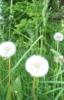 windwelle userpic