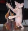 кот-контрабасист