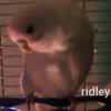 ridleybeak userpic