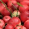 Время собирать яблоки