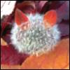vil_nat userpic