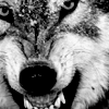 Anissa Roy: Snarling Wolf