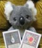 koala, bling, mox, koaladoll, eucad