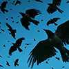 crows by magic_art