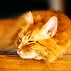 animal // kitty