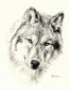 волк, умный хищник