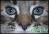 hillbilly_cat userpic