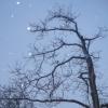 svartving9 userpic