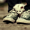 Kitty: shoes