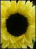 juliaheim userpic