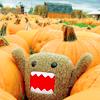 [domo] pumpkin patch