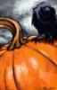 raven_ userpic