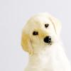 [stock] cute puppy