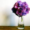 [stock] violet flowers on vase