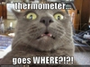 thermometer lolcat