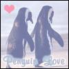 [Penguin Love <3]